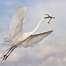 Great Egret by Tomas Abreu