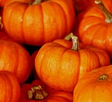 Pumpkins by Bethany-Bailey
