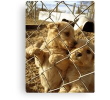 Puppy Love Canvas Print