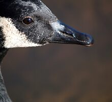 Goose Frame by meowiyer