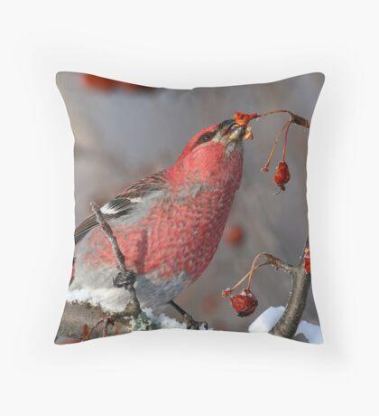 A Taste Of Winter/Pine Grosbeak Throw Pillow