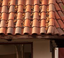 Leaves caught in a tiled roof at sunrise by Carlanne McCrystal
