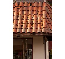 Leaves caught in a tiled roof at sunrise Photographic Print