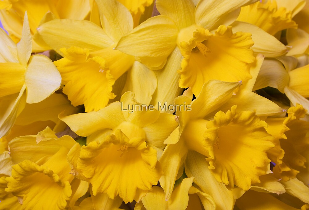 Spring By The Bunch by Lynne Morris