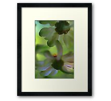 From Beneath The Potted Zinnias Framed Print