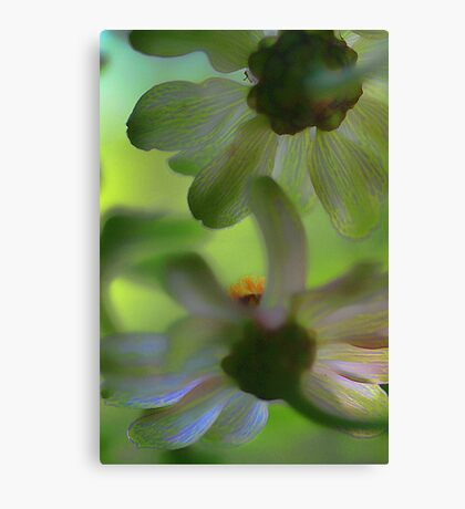 From Beneath The Potted Zinnias Canvas Print