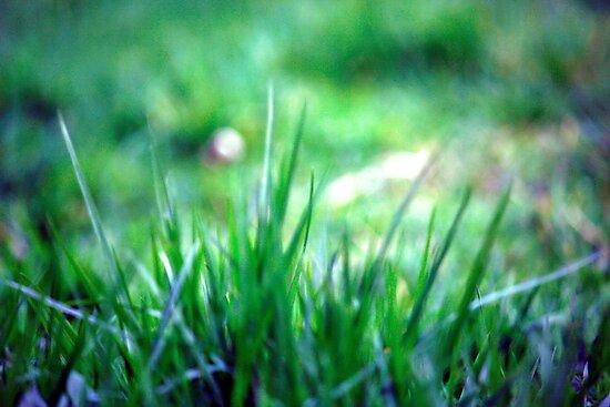 Soft blades of grass by rickvohra