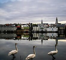 Iceland Geese by Michelle McConnell