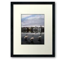 Iceland Geese Framed Print