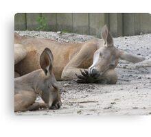 Kangaroos Napping Metal Print