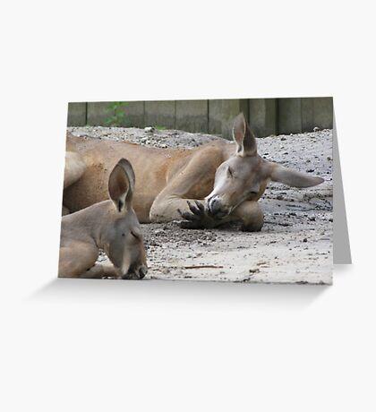 Kangaroos Napping Greeting Card