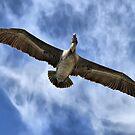 Brown Pelican Flying by Teresa Zieba