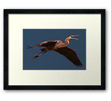 Pterosaur Framed Print