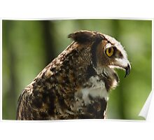 Great Horned Whoo Poster