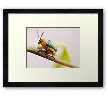 Mr Sheen Framed Print