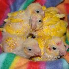 Basket of Baby Birds by Daisy-May