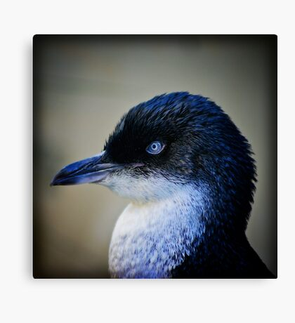 Fairy Penguin Canvas Print