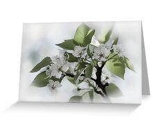 flowering pear Greeting Card