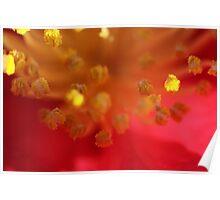 Sunlit Pollen Poster