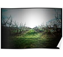 Pear Orchard Dreams. Poster