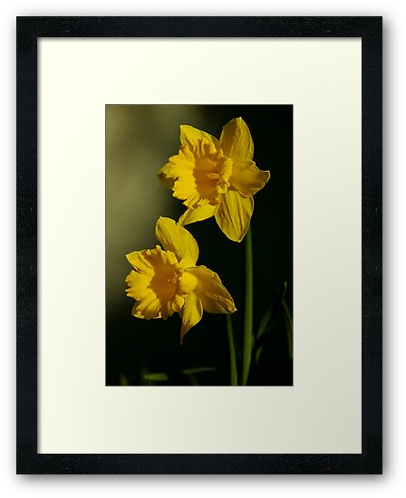 Yellow As The Sun  by Ainsley Kellar Creations
