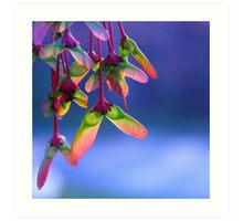 Red Maple Helicopters - Springtime Art Print