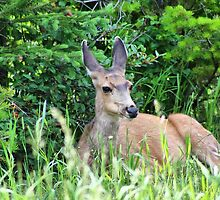 Wildlife in Waterton Lakes NP by Teresa Zieba