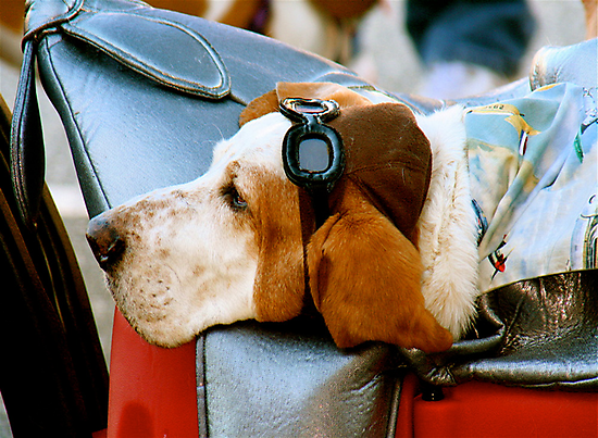 Lazy Dog with Aviator Cap and Goggles by Ray Schiel