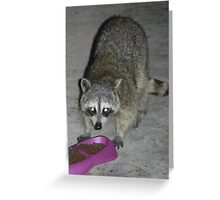 Raccoon's Full Bandito Image Greeting Card