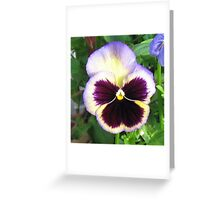 Dreamy Pansy with a Touch of Blue Greeting Card
