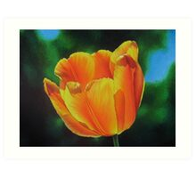 Tulip - Sun on a stem Art Print