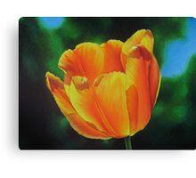 Tulip - Sun on a stem Canvas Print