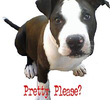 Pretty Please? by Susan Elizabeth Wolding