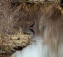 Slender in the waters ... by Barb Miller