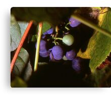 Hidden Grapes Canvas Print