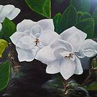 Lisa's Gardenia's by mhubbard