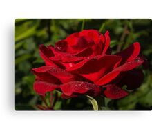 Of Red Roses and Diamonds  Canvas Print