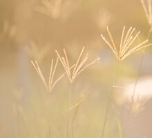 Tall grass in the afternoon sun by Margaret Whyte