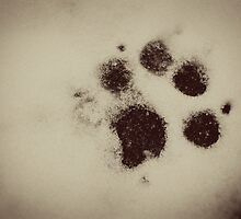 Snow Paw by Ashley Frechette