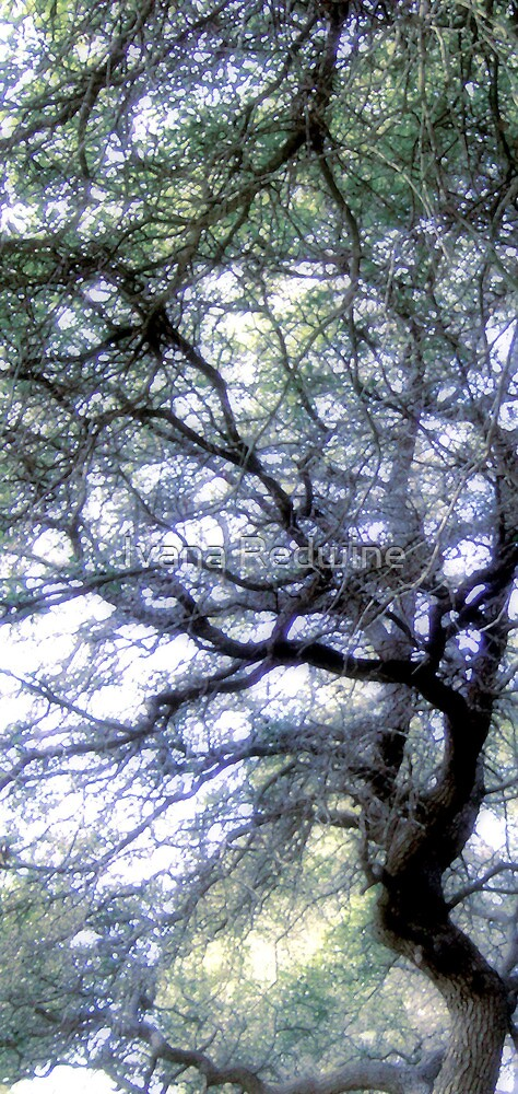 Composition With Trees and Branches – March 30, 2010 by Ivana Redwine