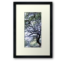 Composition With Trees and Branches – March 30, 2010 Framed Print