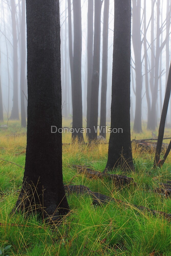 Grass is the forgiveness of nature by Donovan Wilson