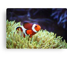"""""""Nemo, where are you?"""" Canvas Print"""