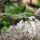  TN Garden Buddies-Anolis Carolinensis Lizard by JeffeeArt4u