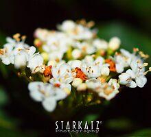 ~Natures Bouquet~ by StarKatz
