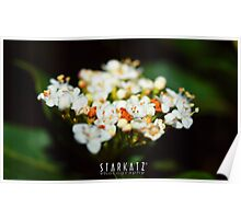 ~Natures Bouquet~ Poster