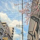 First Sakura 2010 by Christophe Mespoulede