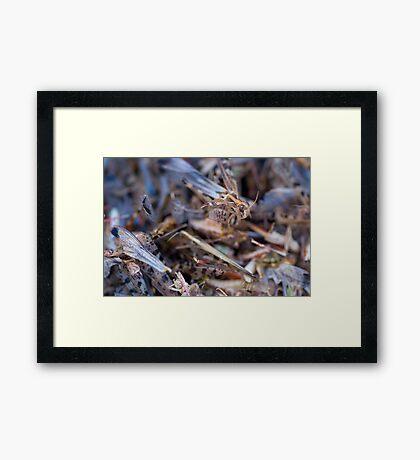 Swarm Framed Print