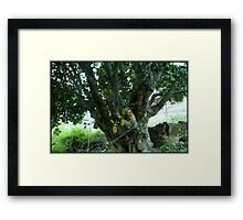 bean & the jack stalk Framed Print