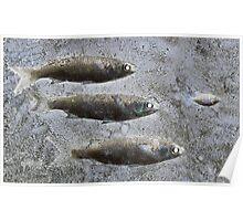 Bait Fish Poster